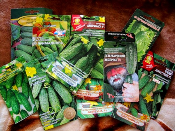 семена огурцов известных производителей