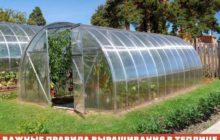 Выращивание в теплице