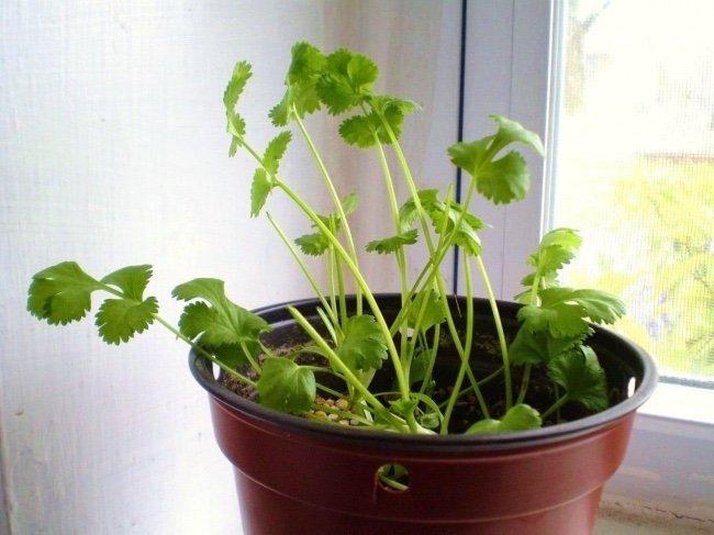 8 растений