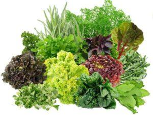 Как правильно сажать зелень?