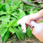 Обработка растений на огороде