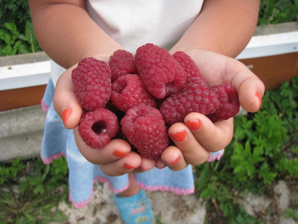 Крупные ягоды малины