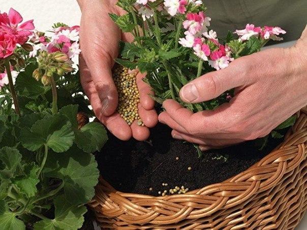 Подкормка домашнего растения