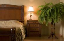 Комнатные растения для спальни: