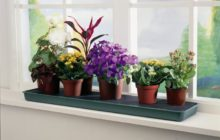 мошки на комнатных цветах
