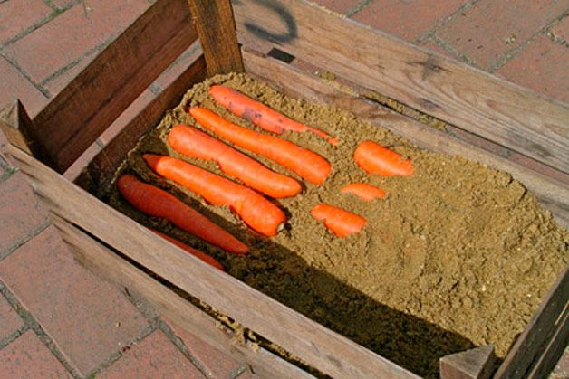 Как хранить морковь зимой в песке