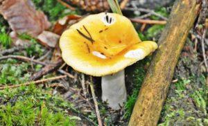 Как быстро растут грибы после дождя?