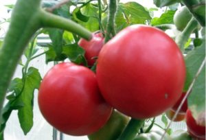 Какие сорта томатов самые сладкие и вкусные?