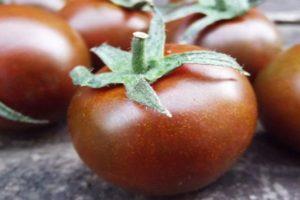 Черные сорта томатов с высокой урожайностью