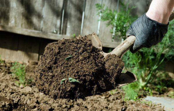 Благоприятные дни для земельных работ в огороде или саду