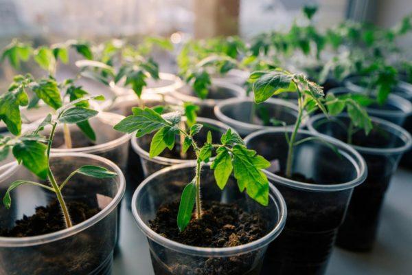 Фазы Луны и свойства растений