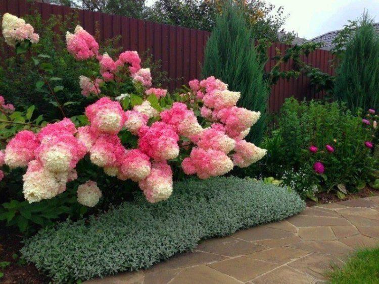 красивоцветущие кустарники для сада