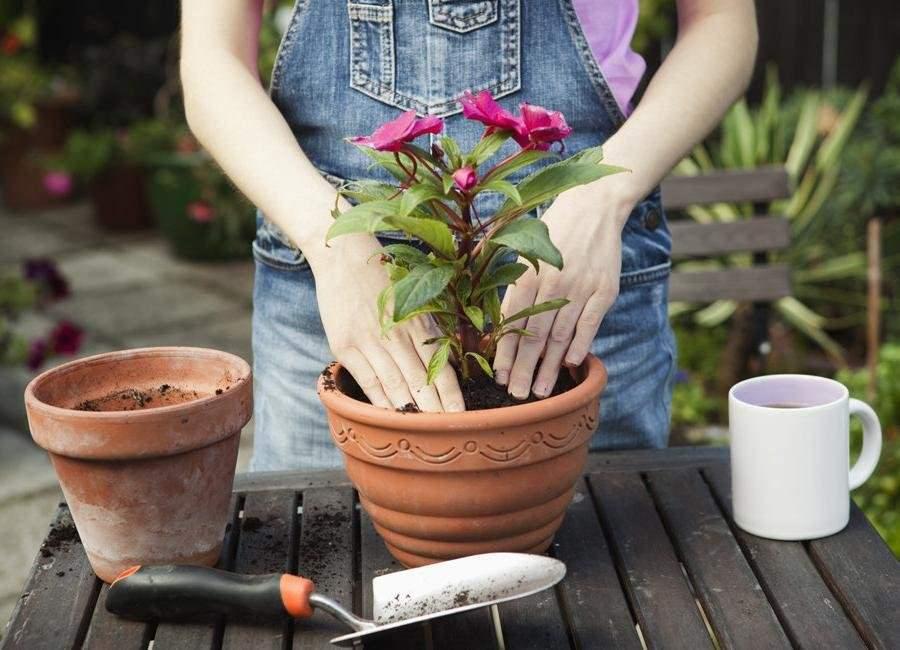 Календарь пересадки комнатных растений по месяцам