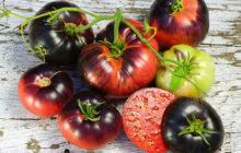 Самые необычные сорта томатов