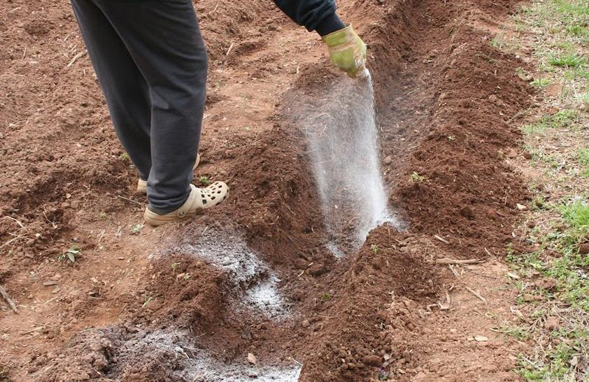 садоводы вносят удобрения в бороздки по краям