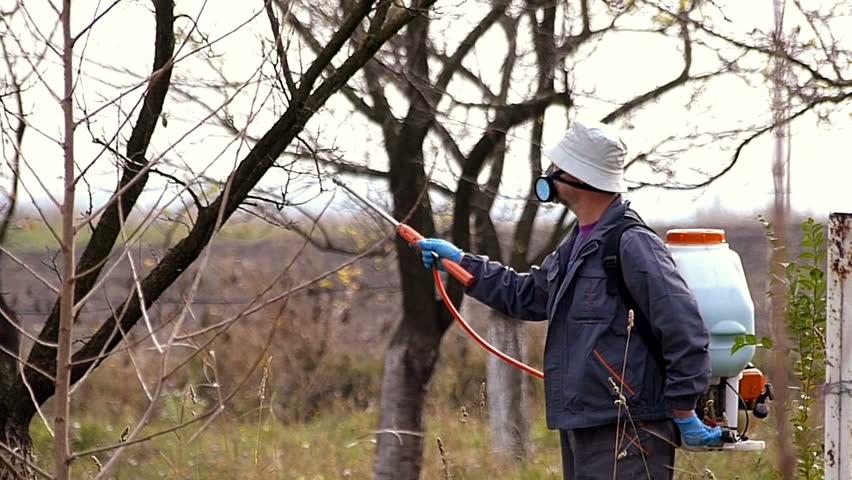 Когда обрабатывать деревья медным купоросом весной