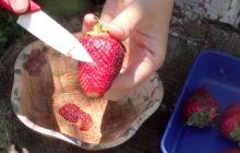 Чем обработать семена клубники для лучшей всхожести семян