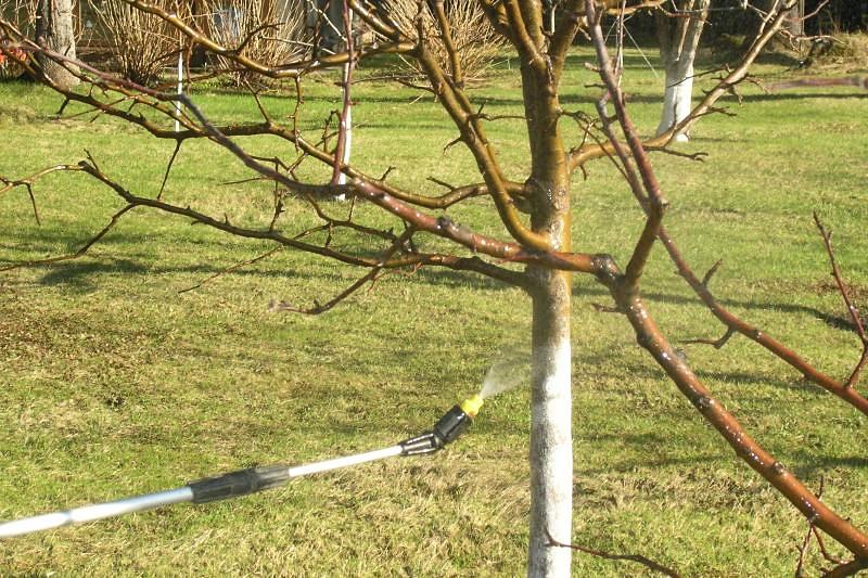 Чем и когда обрабатывать яблони ранней весной
