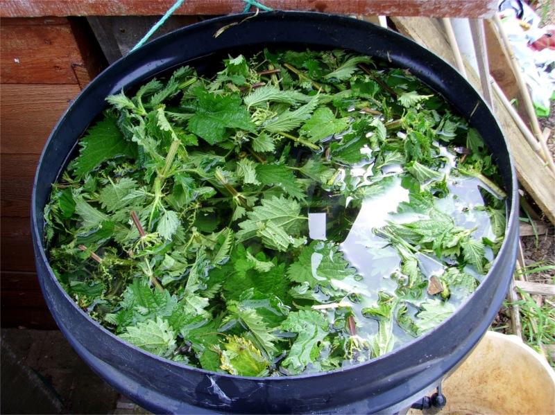 Подкормка из крапивы для растений, рецепты приготовлений, отзывы