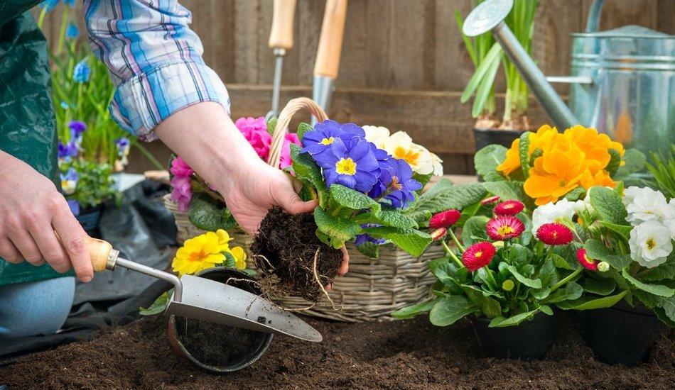 Какие цветы можно посадить в апреле