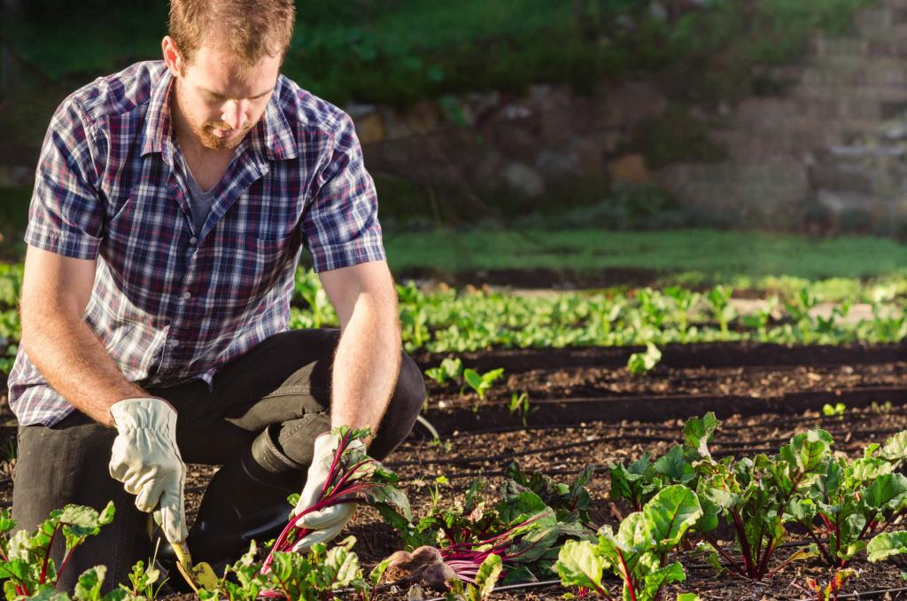 Выходные на майские праздники в 2019 году: календарь, что делать в огороде и на даче
