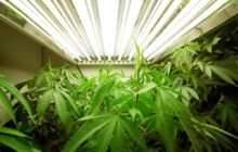 Какие растения запрещено выращивать на территории России