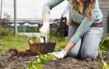 Можно ли работать на Пасху в огороде и на даче