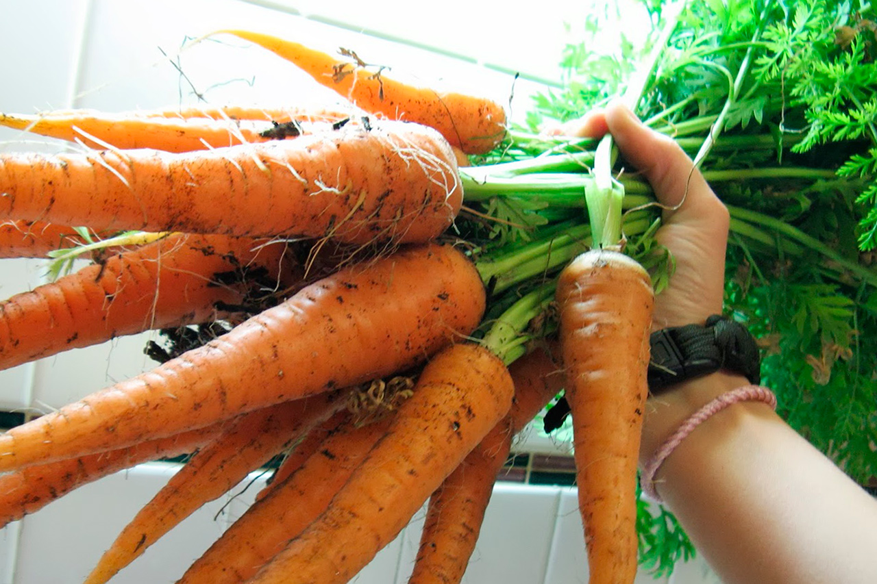 Чем полить морковь, чтобы она была сладкой