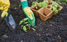 Лунный посевной календарь на май 2019 года для садовода и огородника: таблица с 20 по 26 мая