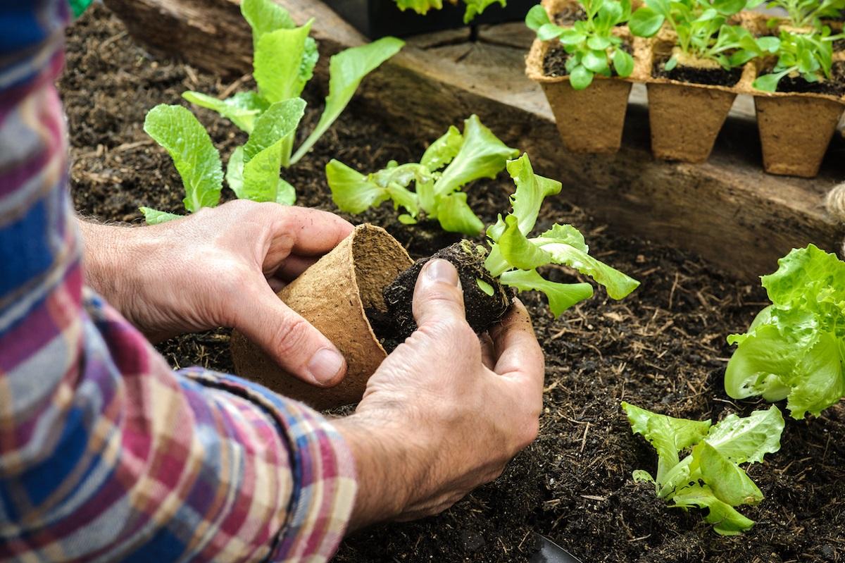 Лунный посевной календарь на май 2019 года для садовода и огородника: таблица с 27 мая по 2 июня