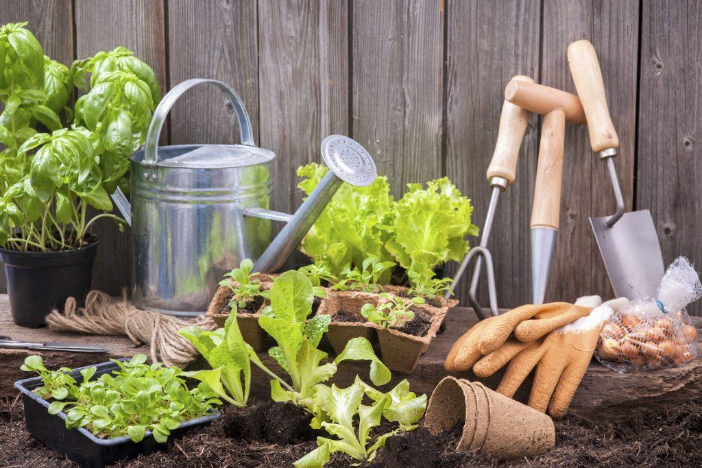 Лунный посевной календарь на 2019 года садовода и огородника: таблица, что можно делать с 3 по 9 июня