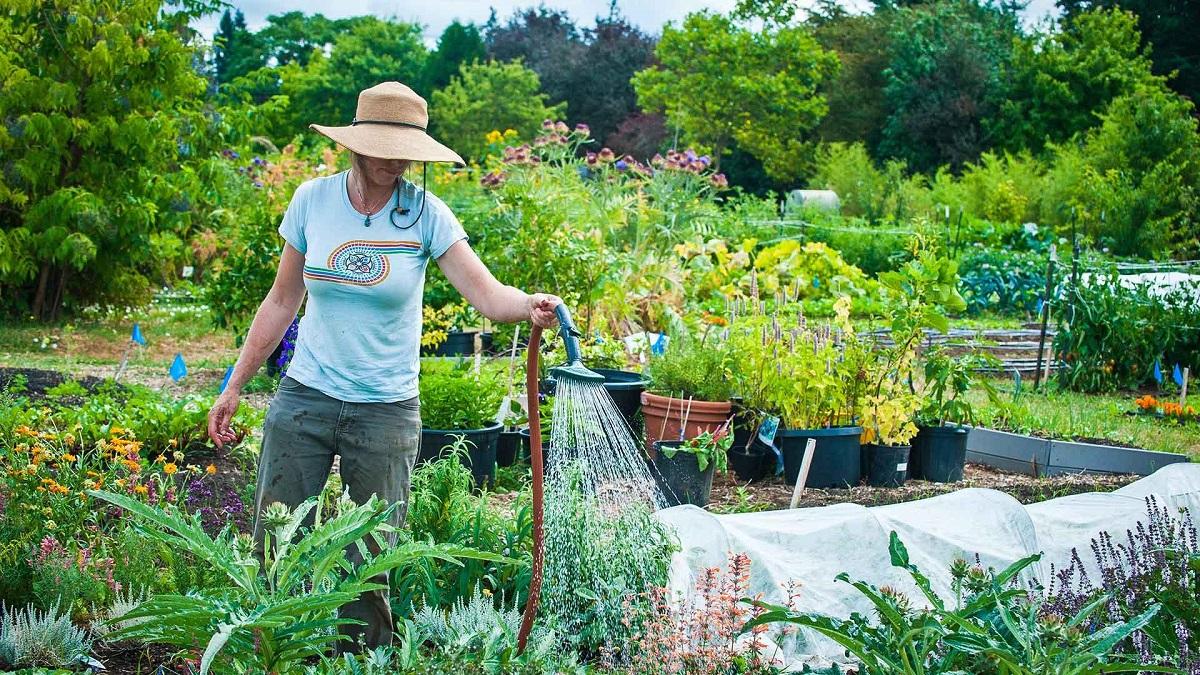 Лунный посевной календарь садовода и огородника на 2019 год: таблица, с 10 по 16 июня