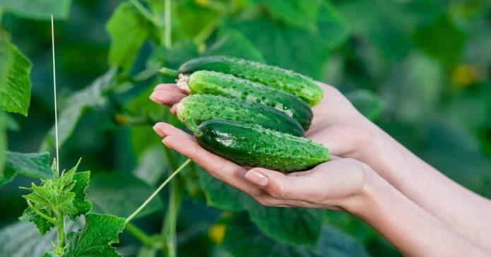 Все основные пропорции по подкормкам и обработкам растений