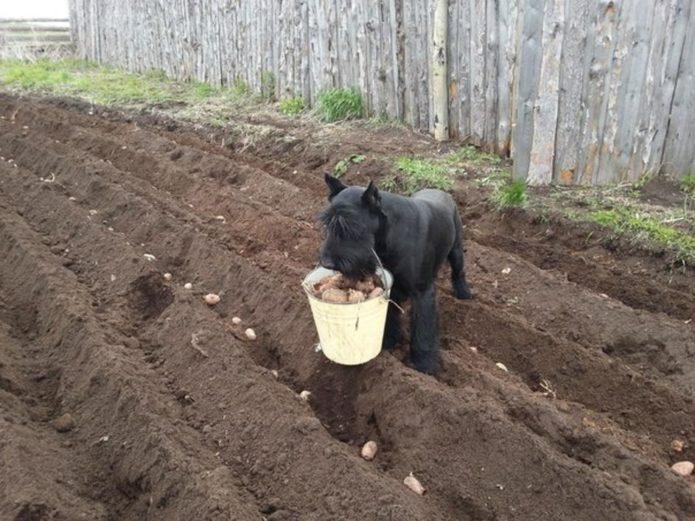 Огородные приколы