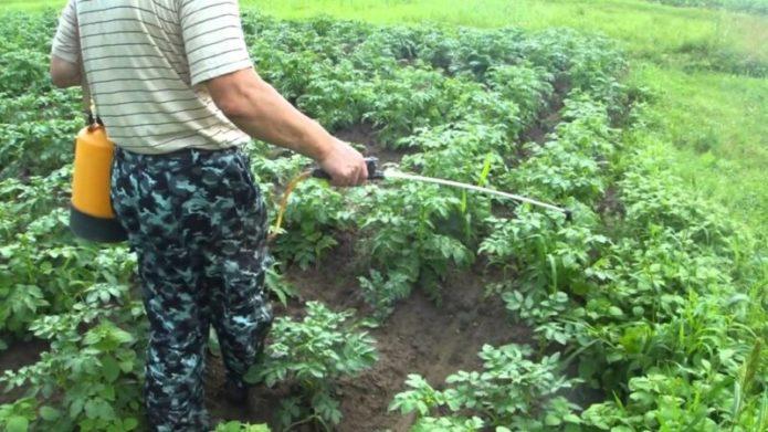 Чем обязательно нужно подкормить картофель, чтобы были крупные плоды