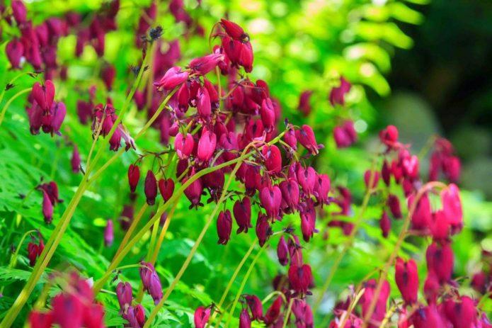 Эти 7 цветов нужно обязательно обрезать после цветения, чтобы цвели дальше