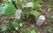 Как сделать капельный полив своими руками из пластиковых бутылок для дачи без затрат, сделай сам