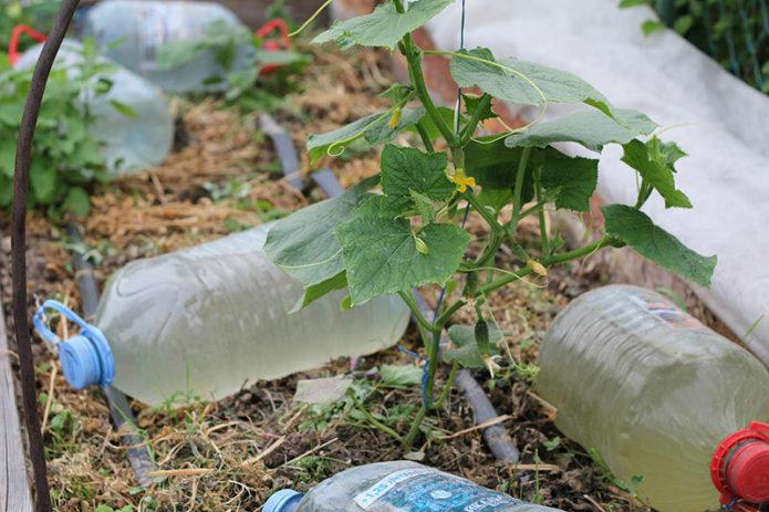 Сделай сам - капельный полив своими руками из пластиковых бутылок