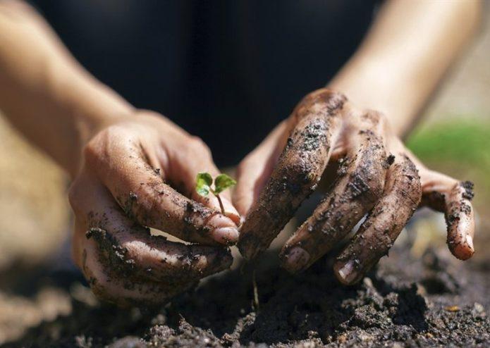 грязные руки от работы на огороде