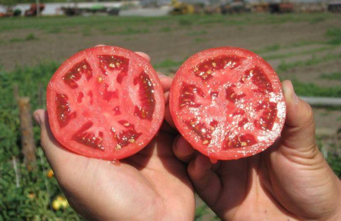 Классные способы сбора семян помидор для ленивых