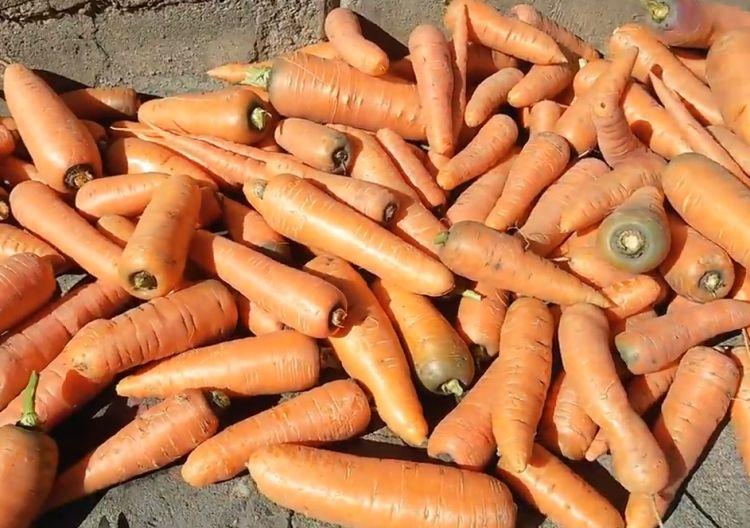 Можно ли мыть морковь перед закладкой на хранение в погреб
