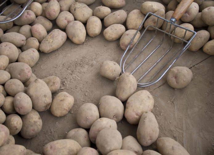 способ хранения картофеля