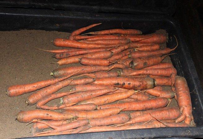 8 идеальных способов хранения моркови зимой в погребе