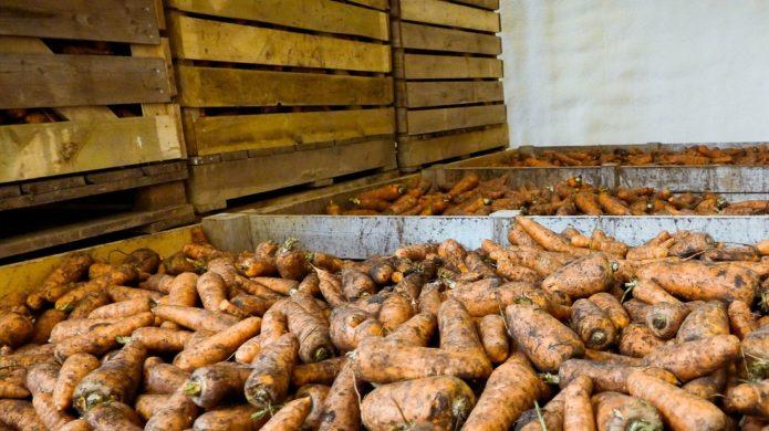 морковь в деревянных ящиках