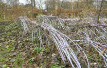Подготовка малины к зиме осенью в Подмосковье, на Урале и Сибири
