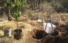 Как правильно сажать вишню осенью в открытый грунт