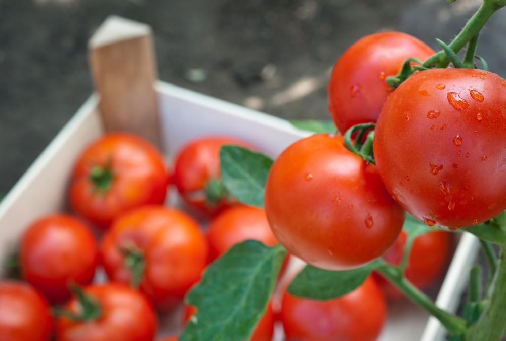 Как сохранить помидоры до зимы в свежем виде в домашних условиях