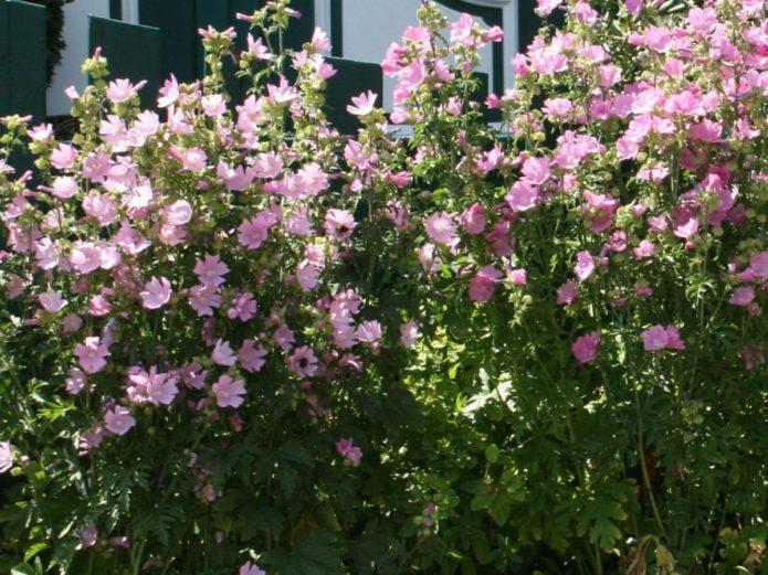 Список цветов, которые можно посадить под зиму в открытый грунт