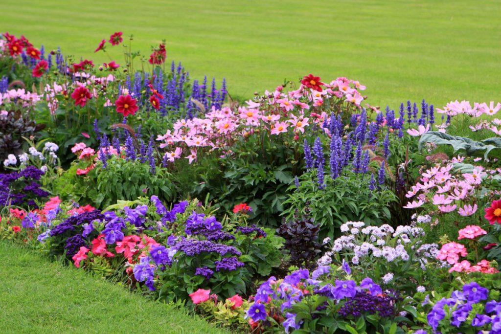 какие семена цветов нужно стратифицировать список