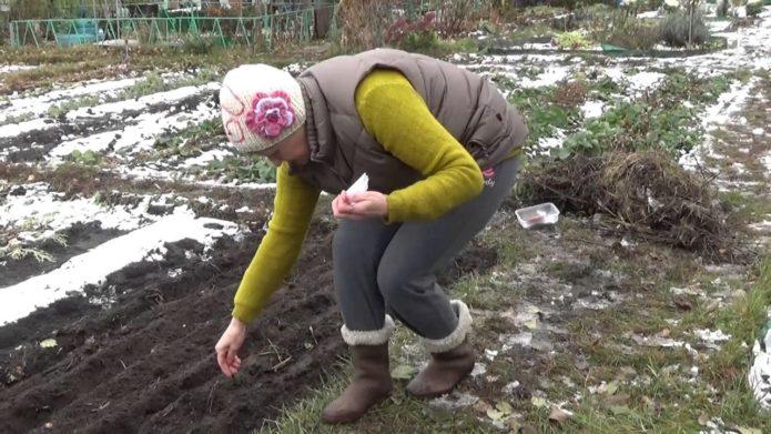 женщина сажает морковь